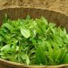 Какой зеленый чай самый полезный для организма?